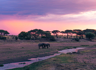 ruaha national park wildlife