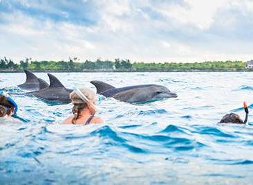 Half Day Kizimkazi Dolphins Tour – Zanzibar