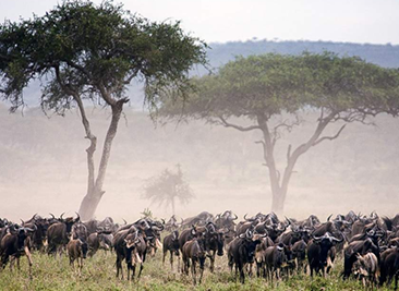 migration safari trip