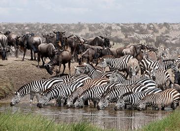migration safari trip1